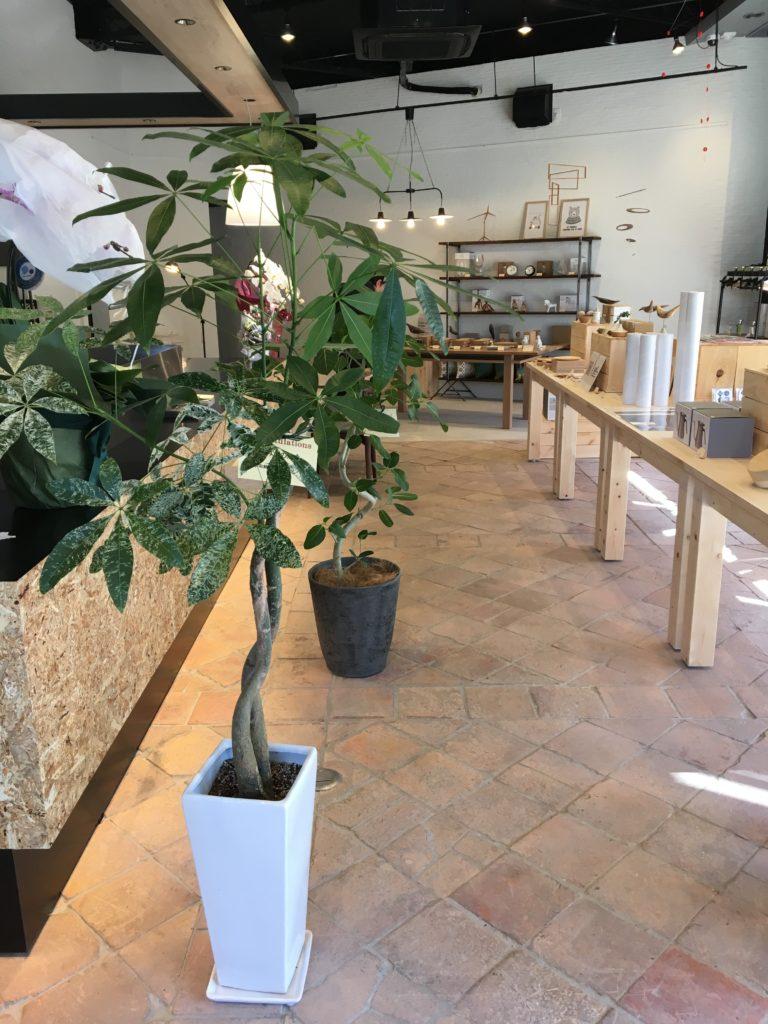 Garden & Plants8