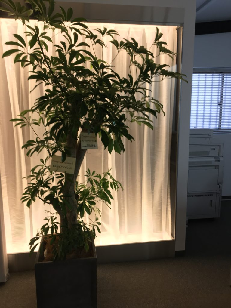 Garden & Plants10